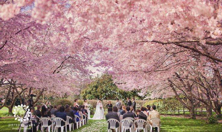 Sarnia Park Cherry Blossom wedding photos by @Perspectives Photo + Cinema