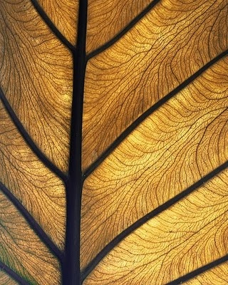 Rosemarie Still BENV2426 2011: Fractals & Fibonacci in Nature