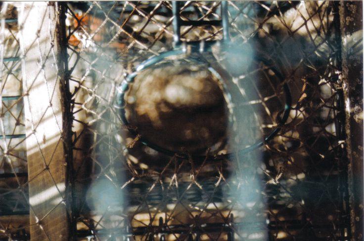 #novascotia #lobster #film #pentax #marine MADDY HOPE 2013