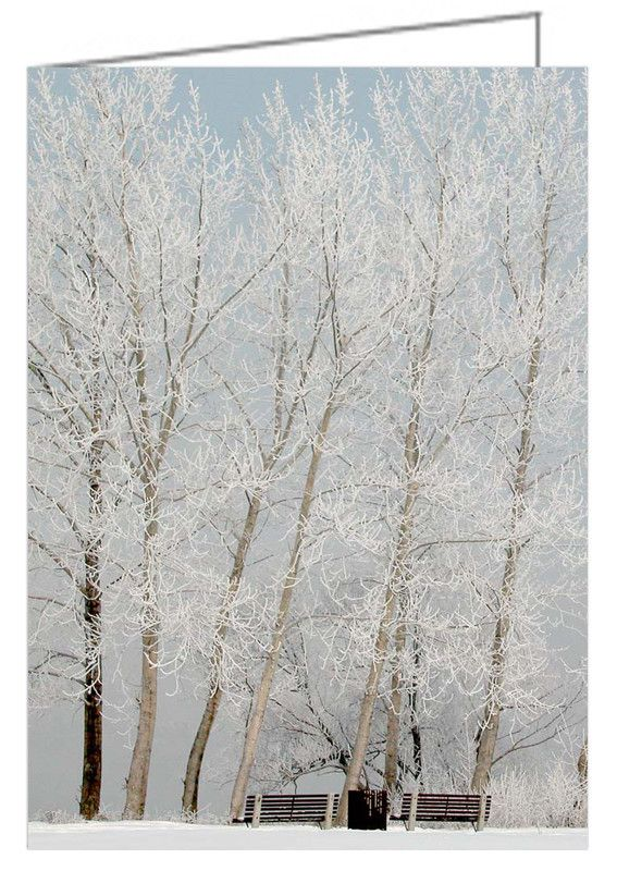 """Benches and Hoarfrost Trees - Greeting Card. A Misty morning near the Ottawa river has coated the trees in sparkling frost. 5"""" x 7"""". Blank inside. Includes envelope. Buy online at Rob's Cards and Prints."""