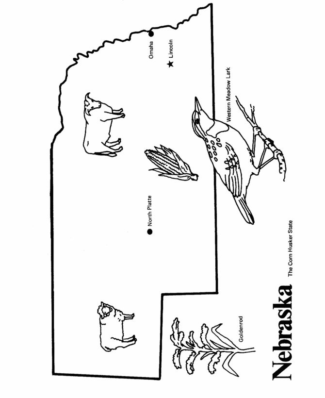 nebraska state bird coloring pages - photo#17