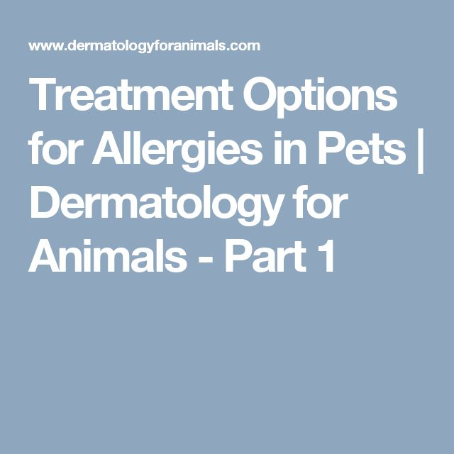 Treatment Options for Allergies in Pets | Dermatology for Animals - Part 1