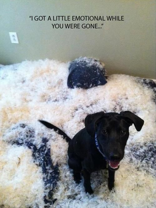 dog tears up couch, I got a little emotional while you were gone