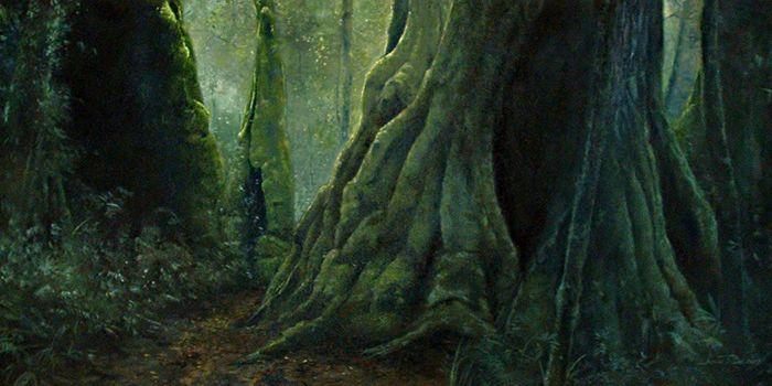 Lost - QLD Sub-Tropical Rainforest