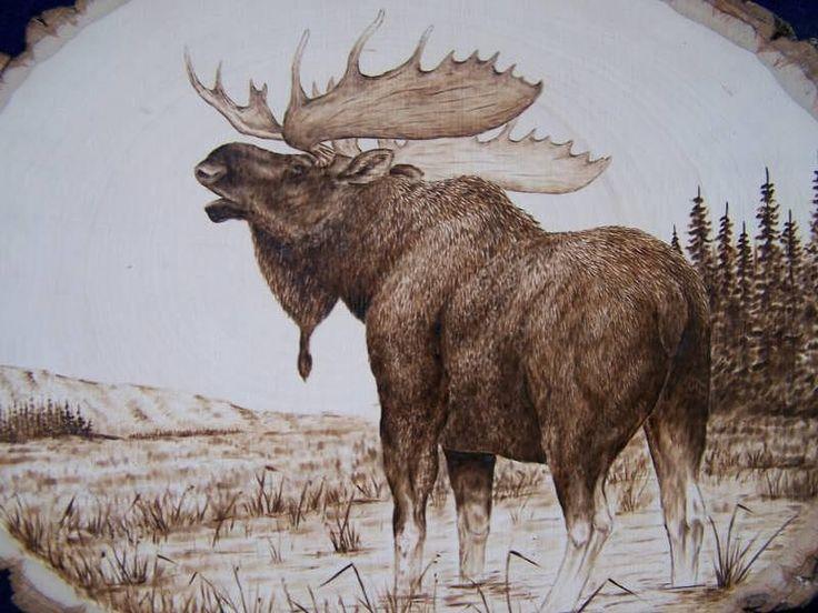 Moose Pyrography Bull Moose By Adam Owen Pyrography