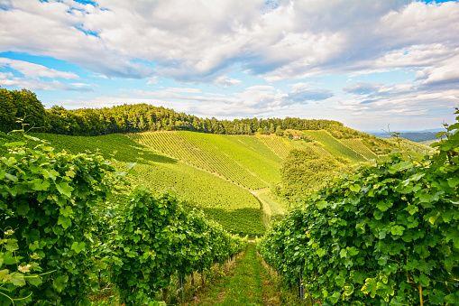Europa -Reise durch das Weinland Frankreich                              …