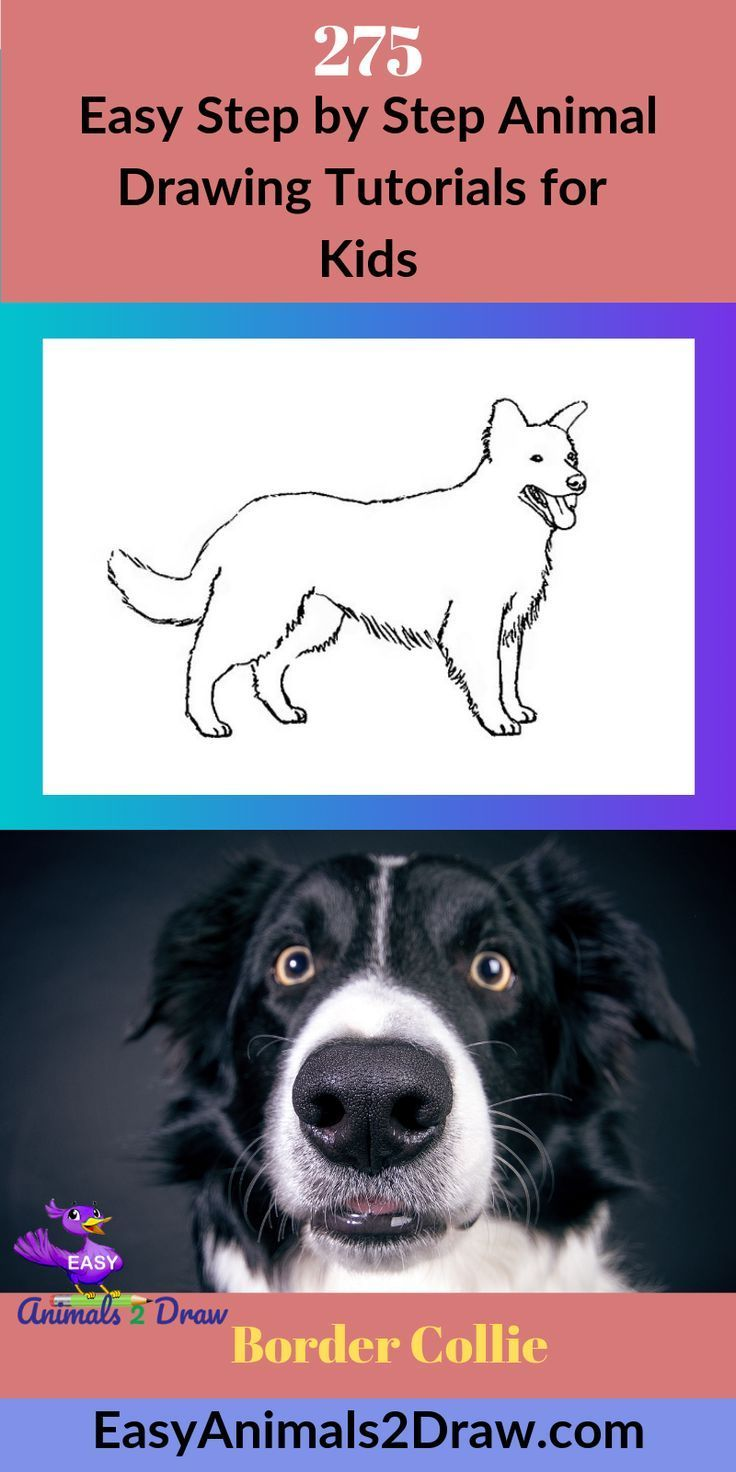 How To Draw A Border Collie Step By Step En 2020 Dessin