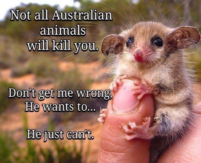 Not All Australian Animals Will Kill You | Australia funny, Funny ...