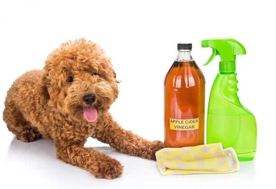 Keeping Fleas and Ticks Away Using  Vinegar 6/3/16**********