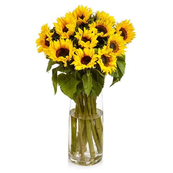 Sunflowers, bold and bright fresh flowers from Bill's.