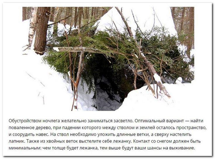 Советы по выживанию в зимнем лесу (11 фото)