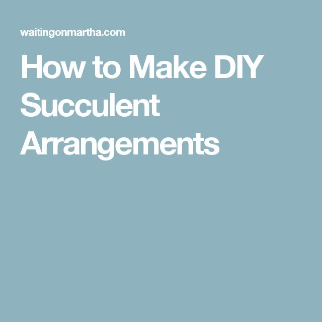 How to Make DIY Succulent Arrangements