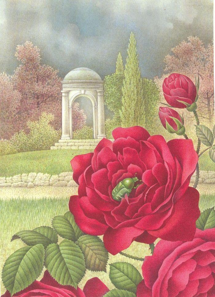 Rosa Coltivata e Cetonia (Europa–Parchi e Giardini)