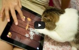 Funny Videos For Cat Playing on Ipod's