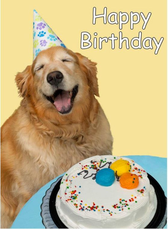 birthday dogs images 1000 ideas about happy birthday dog meme on pinterest 4102