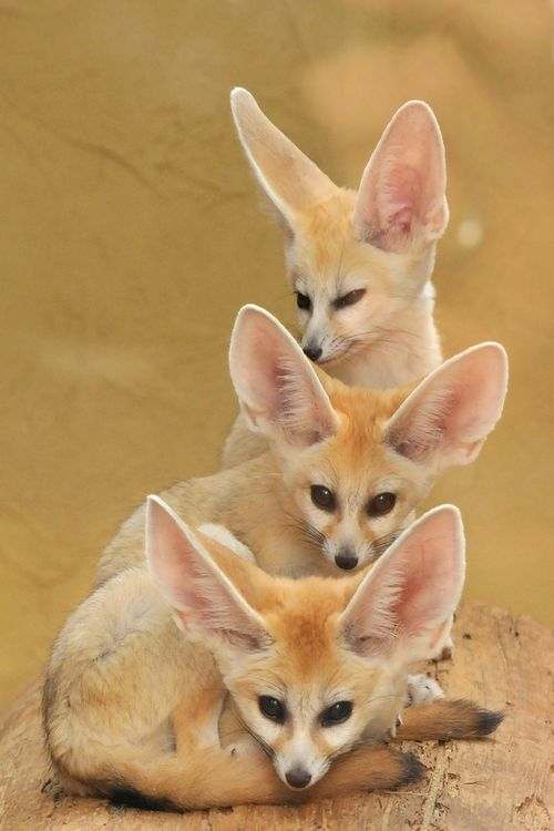 """ Tower of Fennecs by Joachim S. Müller """
