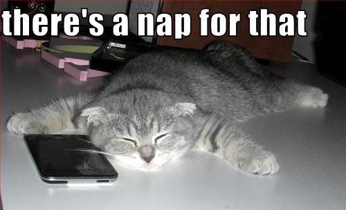 Feeling Tired: Lol Cat, Funny Cat, Cat Meow, Cat Naps, Life Mottos, Naps Time, Funny Animal, Tech Humor, Cat Meme