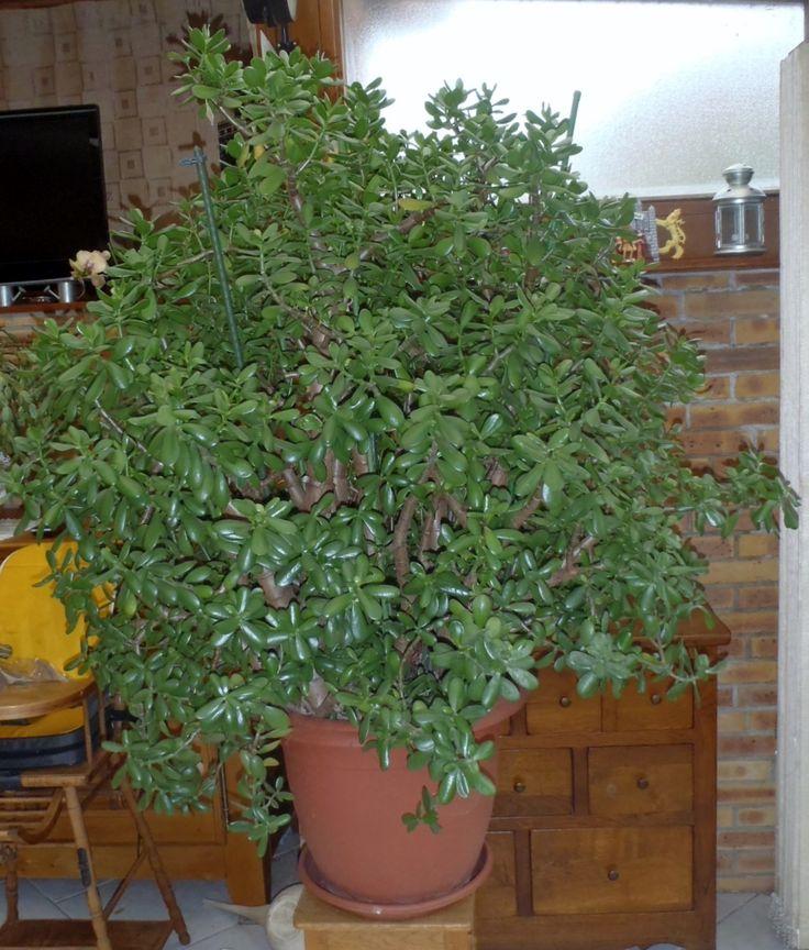18 best mes plantes l gumes et autres soins images on pinterest plants tomatoes and. Black Bedroom Furniture Sets. Home Design Ideas