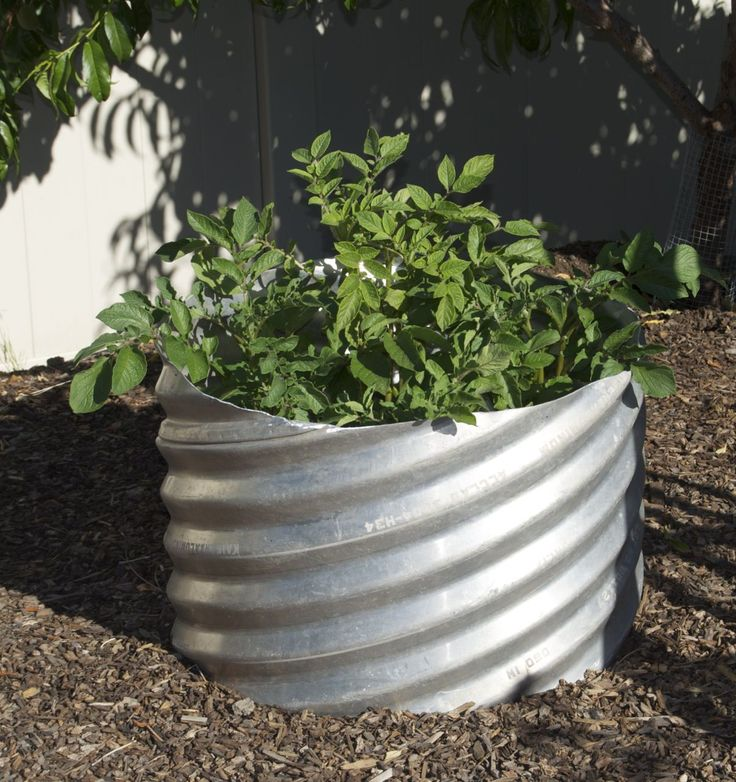 Using galvanized corrugated pipe for vegetable containers gardening ideas pinterest - Galvanized containers for gardening ...