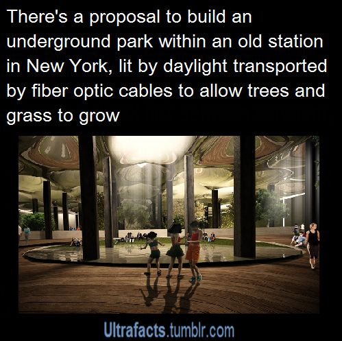 Proposal of an underground park in New York with sunlight provided by fiber optic cables to allow trees to grow.