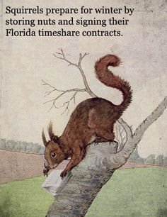 Squirrels prepare for winter by storing nuts and signing their Florida timeshare contracts.