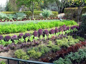 Maintaining Organic Gardens http://www.healthyorganics.net/