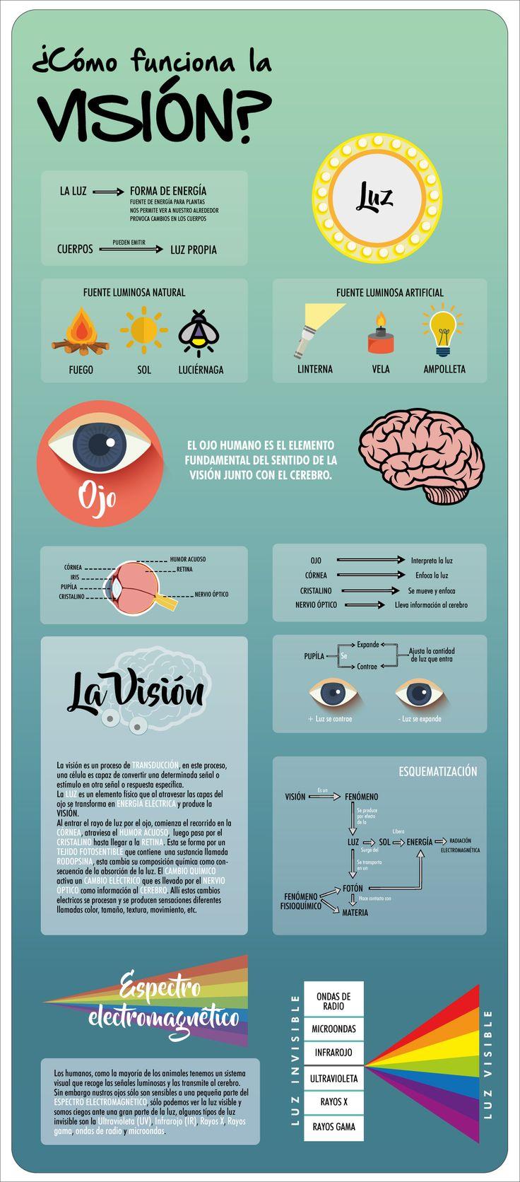 Infografía - La visión