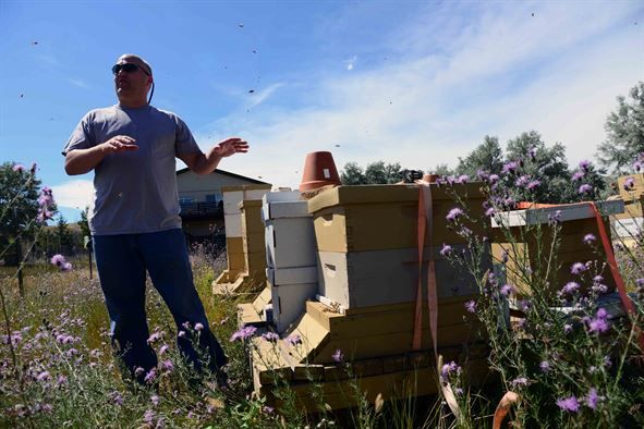 Retired Maj. Brian Rogers, a master beekeeper with the Great Falls Wanna-Bee Beekeeping Club, shows the new home of 25,000 relocated honey bees July 26, 2016, at Great Falls, Mont. The bees were saved by the combined efforts of three enlisted Airmen, a biologist employed by the 341st Civil Engineer Squadron and a local master beekeeper. (U.S. Air Force photo/Airman 1st Class Magen M. Reeves)