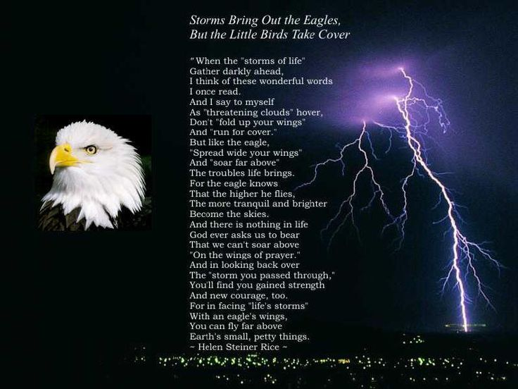Storms Bring Out The Eagles.