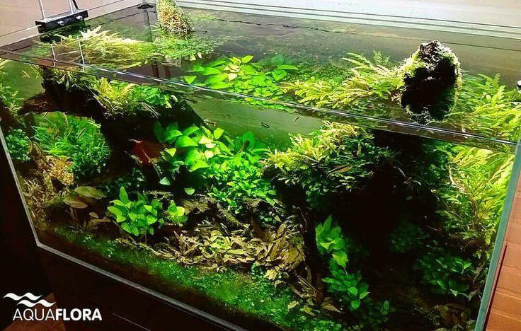 Update of our 90cm planted aquarium without CO2 injection.  #Aquaflora #Aqvainnova #Aquascaping #Planted #Aquarium #Aquatic #Plant #Freshwater #aquascape #plantedtank #plantedaquarium #FAAO