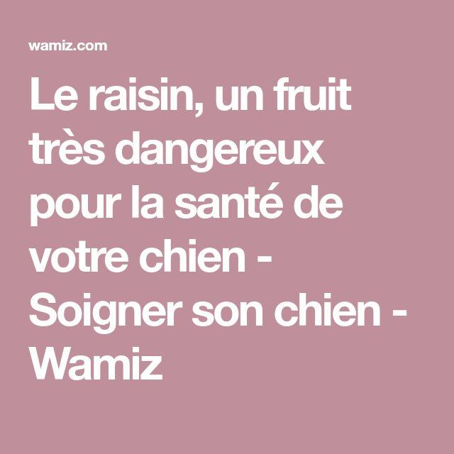 Le raisin, un fruit très dangereux pour la santé de votre chien - Soigner son chien - Wamiz