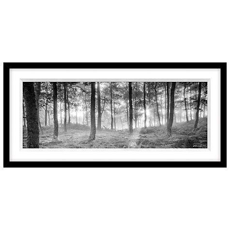 Buy Mike Shepherd - Misty Trees Framed Print, 49 x 104cm Online at johnlewis.com