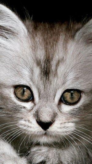 Le chat ouvrit les yeux, le soleil y entra. Le chat ferma les yeux, le soleil y resta. Voilà pourquoi le soir, quand le chat se réveille, J'aperçois dans le noir deux morceaux de soleil. Maurice Carême