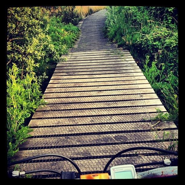 #funandgames #dontfall #wood #bridge #whindey #mountainbiking #offroad #outdoors #green #wildflowers #gnats! #bike #cardio #smashed #stithianslake #stithians #kernow #kernowlife