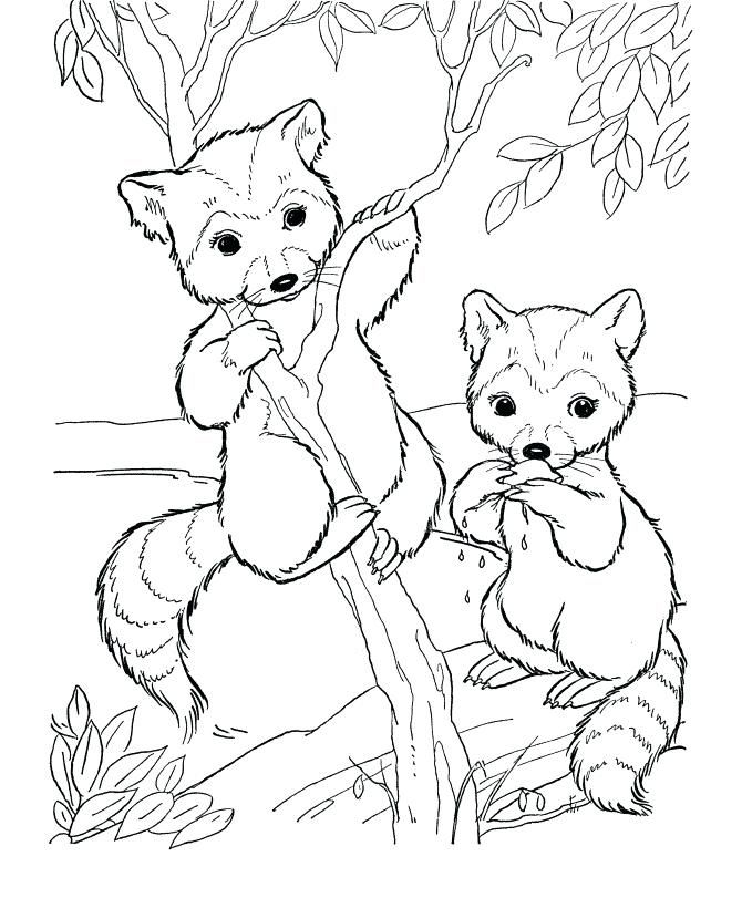 Cute Animal Coloring Pages Best Coloring Pages For Kids Deer Coloring Pages Animal Coloring Books Zoo Coloring Pages