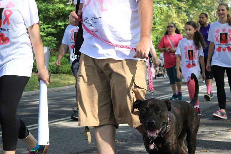 #cancer walk #causes #central park #dog #new york #people #pet #walking