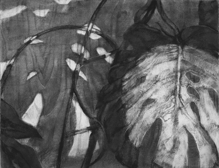 2013/charcoal drawing/monochrome/leaf/flash
