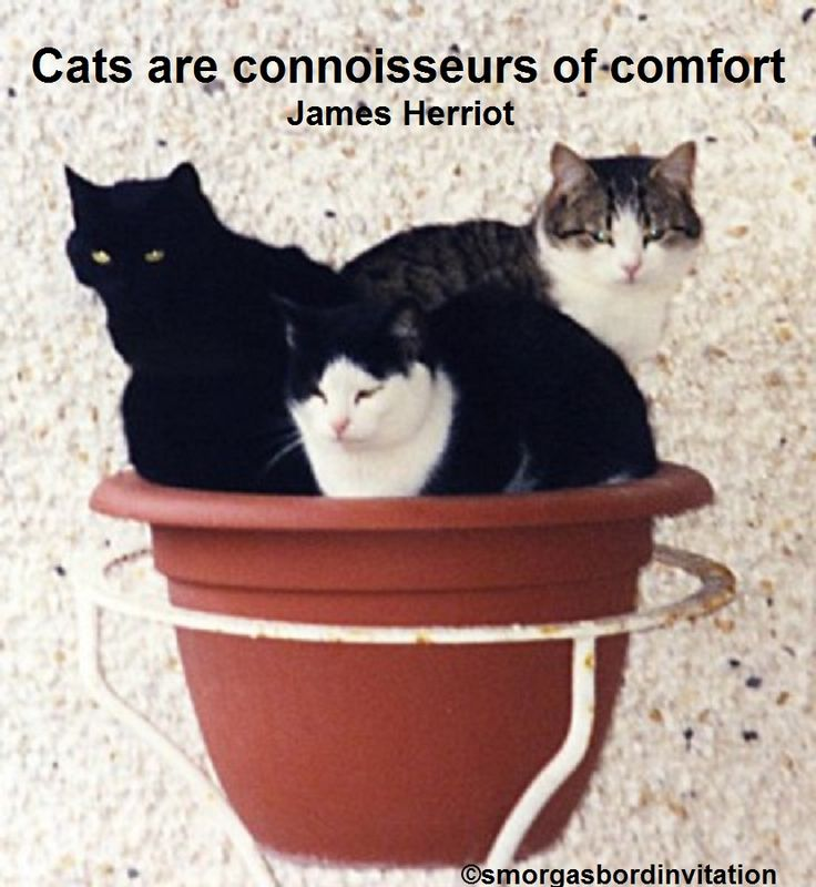 As my three Irish feral cats knew only too well as they awaited dinner each night.