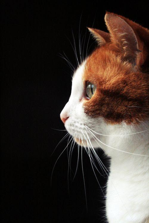 pretty kitty profile