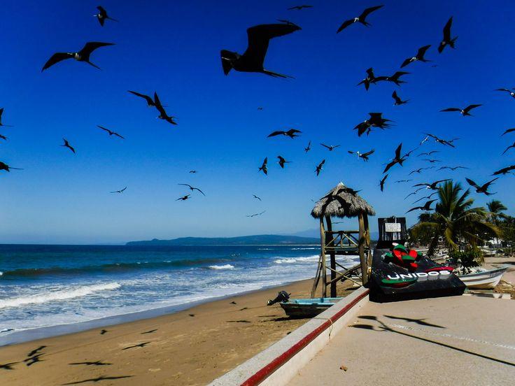 https://flic.kr/p/S5H51z | La Peñita De Jaltemba, Nay. | A Flock Of Seagulls