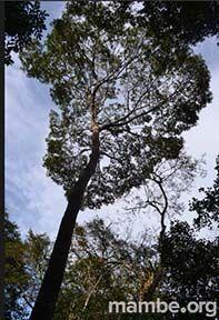 Pasa una noche en la cima de los árboles en el Amazonas! #Viajes Descubre la Colombia profunda con Mambe.org!