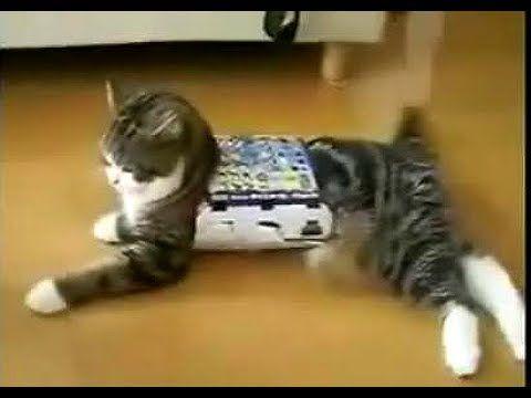 Самое смешное видео про животных