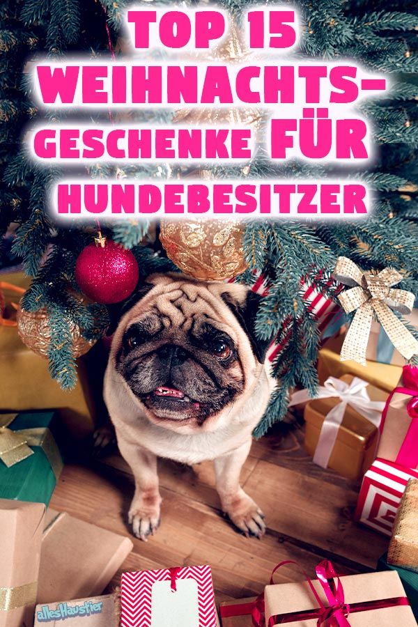 Weihnachtsgeschenke für Hundebesitzer: Die Top 15 Geschenk-Ideen ...
