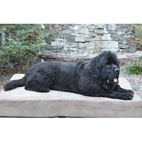 "Big Barker 7"" Orthopedic Dog Bed with Pillow-Top (Sleek Edition) 