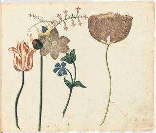 A flower study Adolf Fredrik Clásen