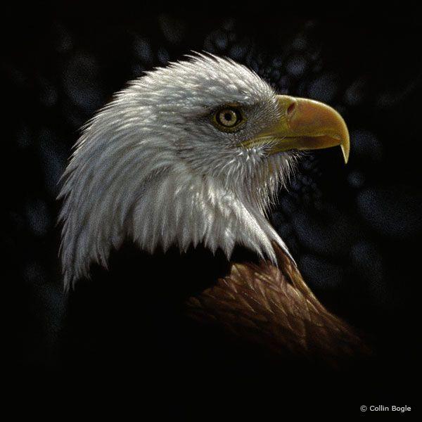 Bird Paintings, Bird Art Prints, Bald Eagle Artwork, Chickadee Artist