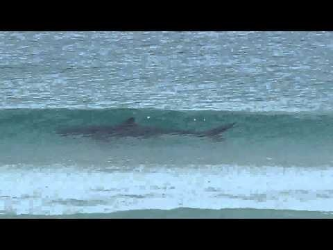 Great White Shark in my home town Cape Town, Fish Hoek.