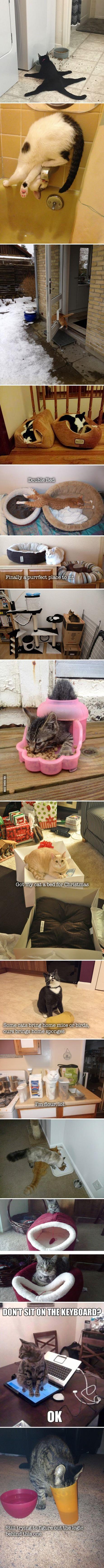 nice 15 Hilarious Examples Of Cat Logics by http://dezdemon-humor-addiction.xyz/funny-animal-humor/15-hilarious-examples-of-cat-logics/