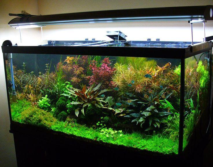 400 besten aquariums bilder auf pinterest aquarien aquarium ideen und planted aquarium - Aquarium ideen ...