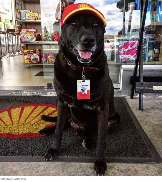 Sarah Plannerer never realized that she would geta special gift when she purchased and began building a Shell Gas StationinMogi das Cruzes, Brazil two years ago. That special gift was a frightened and lost pup that was wandering around the station